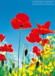 Fototapeta 371 Poppy Field